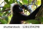 kedah  langkawi  malaysia   apr ...   Shutterstock . vector #1281354298