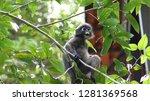 kedah  langkawi  malaysia   apr ...   Shutterstock . vector #1281369568