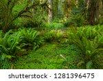 Usa  California  Redwoods...