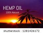 hemp oil. marijuana leaf.... | Shutterstock . vector #1281426172