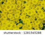 pretty flowers background. | Shutterstock . vector #1281565288