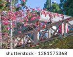 sakura flower background.... | Shutterstock . vector #1281575368