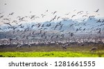 flock of  migrating common... | Shutterstock . vector #1281661555
