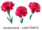 set of red carnation schabaud... | Shutterstock .eps vector #1281754972