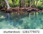 mangrove trees roots and blue... | Shutterstock . vector #1281775072