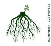 tree roots and germinate limb.... | Shutterstock .eps vector #1281904588