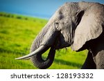 Elephant Portrait Close Up On...
