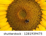 Background From Sunflower With...