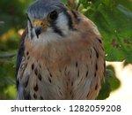 close up head portrait american ... | Shutterstock . vector #1282059208