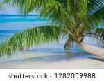 palm tree on the starfish beach ... | Shutterstock . vector #1282059988