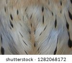 close up  detail of feathers... | Shutterstock . vector #1282068172