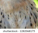 close up  detail of feathers... | Shutterstock . vector #1282068175