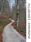 Stock photo path on selva de irati 1282287712