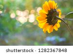 one pretty sunflower with light ... | Shutterstock . vector #1282367848
