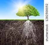 tree and soil with roots and... | Shutterstock . vector #1282500052