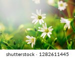 in the forest  the first spring ... | Shutterstock . vector #1282611445