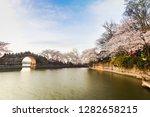 Asia China wuxi yuantouzhu park scenery, spring yuantouzhu beautiful cherry blossoms in full bloom
