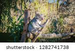 a close up photo of a beautiful ... | Shutterstock . vector #1282741738