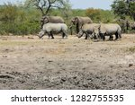 encountered this rhinoceros... | Shutterstock . vector #1282755535