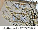 hamamelis virginiana bright...   Shutterstock . vector #1282770475