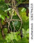 round tracery bottle gourd...   Shutterstock . vector #1282796215