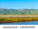 common crane birds in the... | Shutterstock . vector #1282824505