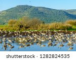 common crane birds in the... | Shutterstock . vector #1282824535