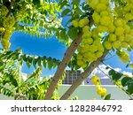 grosellas in dorado  puerto... | Shutterstock . vector #1282846792