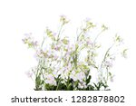 beautiful flowers on white... | Shutterstock . vector #1282878802