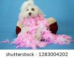 dog photo shoot. beautiful... | Shutterstock . vector #1283004202
