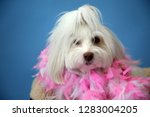 dog photo shoot. beautiful... | Shutterstock . vector #1283004205