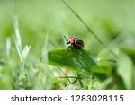 classic close up of a brown...   Shutterstock . vector #1283028115