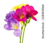 Bouquet Of Freesias Flower ...