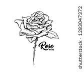 rose wine flower hand drawn... | Shutterstock .eps vector #1283047372