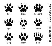 Animals footprints, paw prints. Set of different animals and predators footprints and traces. Cat, lion, leopard, tiger, fox, wolf, coyote, dog, bear. Vector