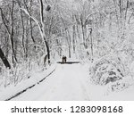amazing fairytale winter city...   Shutterstock . vector #1283098168