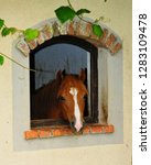 Cute Red And Brown Horse...