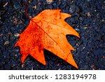 Single Autumnal Leaf Fallen...