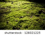 Moss On A Forest Floor