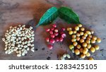 closeup ripe coffee beans on... | Shutterstock . vector #1283425105