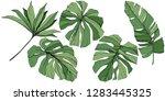 exotic tropical hawaiian summer....   Shutterstock . vector #1283445325