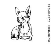 Chihuahua Sketch. Hand Drawn O...