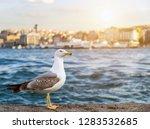 seagull standing sunset summer... | Shutterstock . vector #1283532685