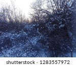 a snowy tree in the winter  at... | Shutterstock . vector #1283557972