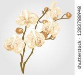 golden orchid flower watercolor.... | Shutterstock .eps vector #1283788948