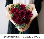 Very nice young woman holding big beautiful blossoming mono bouquet of fresh gerber flowers in burgundy color on the grey wall background  - stock photo
