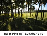 lot of palm trees grow on a...   Shutterstock . vector #1283814148