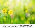 idyllic flower bed in... | Shutterstock . vector #1283877568
