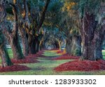 Live Southern Oak Trees At...