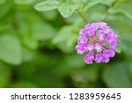 close up to front side of the... | Shutterstock . vector #1283959645